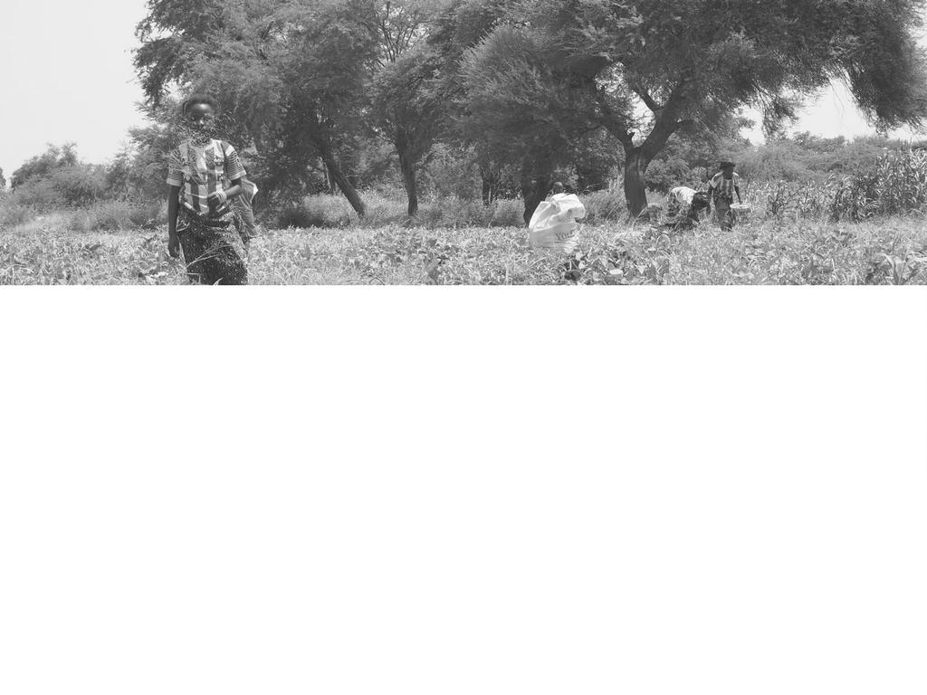 Valoriser les filières sésame et niébé pour les familles de l'Oudalan